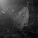 Ranní pavučina