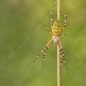 Pavoučí pole dance