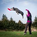 Dogfrisbee trénink