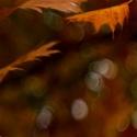podzimní melancholická