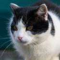 Sára - kočka