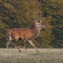 letošní podzim v přírodě (8)