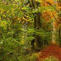V barevném lese