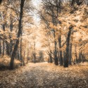 Sen o podzimu