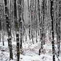 Zimní lesík