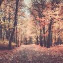 Sen o podzimu II
