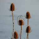 Štětky v zimním slunci