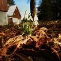 Začátek jara ☘????
