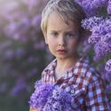 Když kvetou šeříky