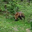 obrázky z Bavorského lesa (8)