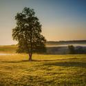 V ranním slunci