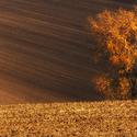 Podzim v polích