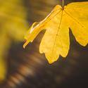 prozářená podzimní