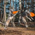 Létající pes :-D