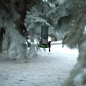 Zimní krmení