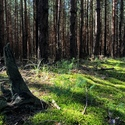 Bzenecký les