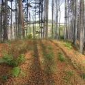 Stíny podzimu