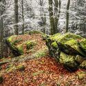 Zimní kontrasty v lese