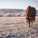 Prostě kůň