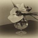 Orchidej I.