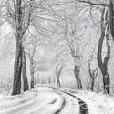Zimní alej pod Javorníkem