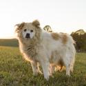 Naše psí babička