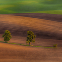 zvlněná krajina jižní Moravy