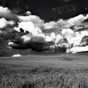 Pšeničná bouře