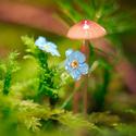 ...pod deštníkem