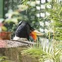 Ptactvo v ZOO