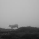 Ovečka v mlze