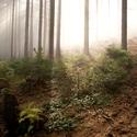 Zatím ještě les...
