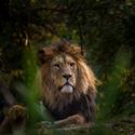 Lví pohoda