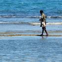 Sběr mořských plodů