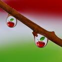 Jablečné kapky