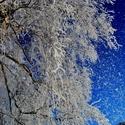 Zima čaruje...