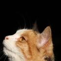 Kočičí zvědavost