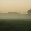 Mlhavé Pohansko