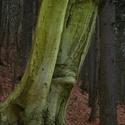 Pán lesa