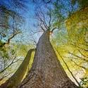 Pohled na stromy