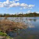 Rybník Velký Budní