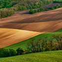 Zvlněné pole