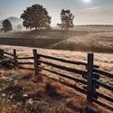 V pastvinách