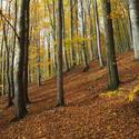 v  podzimním hávu...