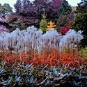 Podzimní den v lázen'ském parku