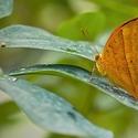 Motýlí snůška