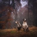 Mlhavým lesem
