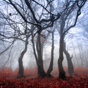Mlžným lesem