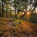 Suché léto v lese