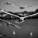 Křídla nad řekou